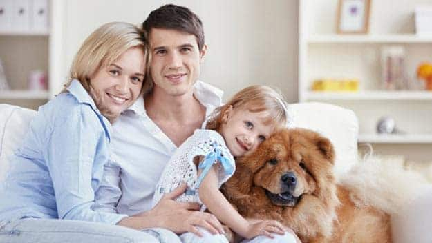 Wills & Trusts dog-young-family Direct Wills Loughborough